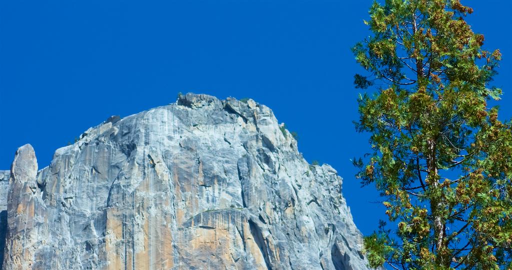 GraniteTrees